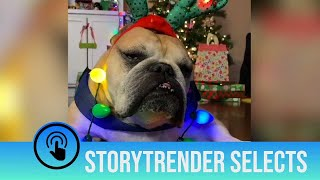 Merry Christmas from StoryTrender... Here's a Christmas bulldog 🎄🐶