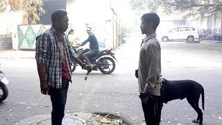 Short film on Dog