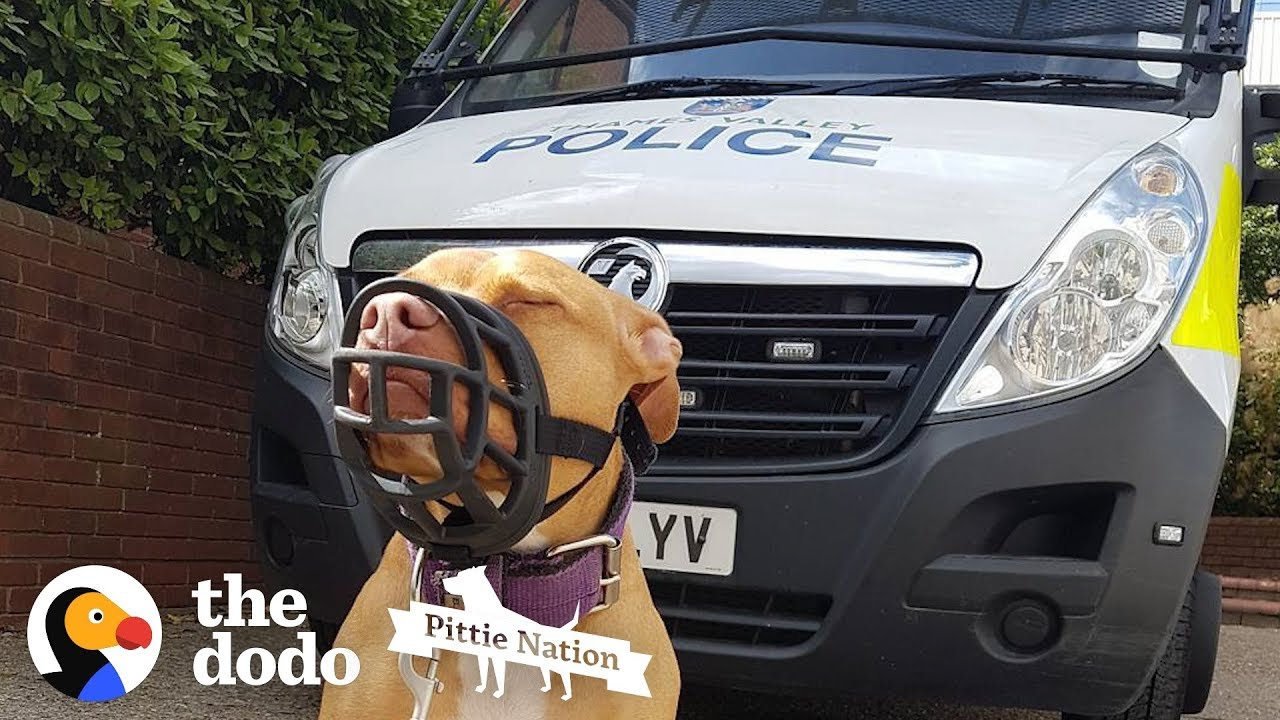 Police Take Guy's Dog Just Because She's A Pit Bull    The Dodo Pittie Nation