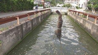 超汚い水路に生きたテナガエビをブッ込んだ結果... thumbnail
