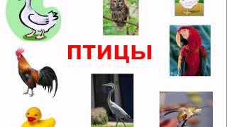 птицы для детей