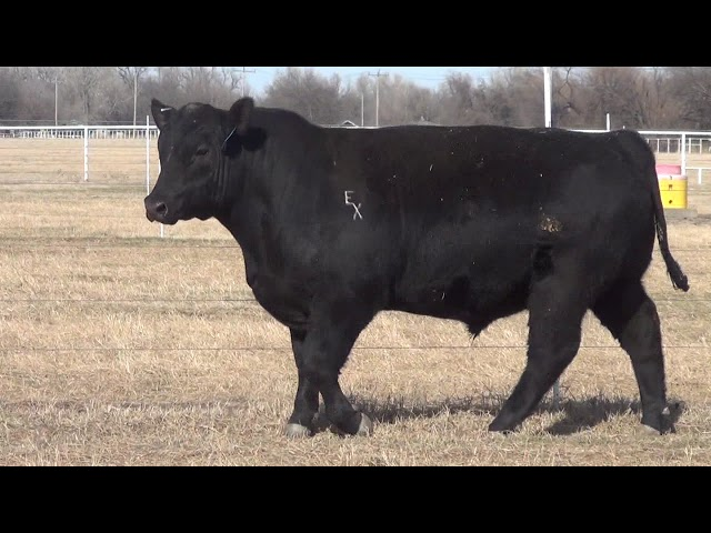 Express Ranches Lot 416