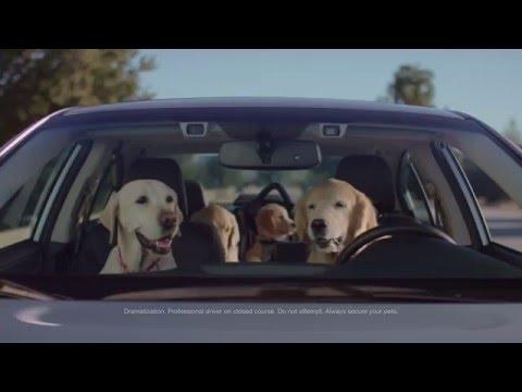 subaru-dog-tested-|-subaru-commercial-|-phone-navigation