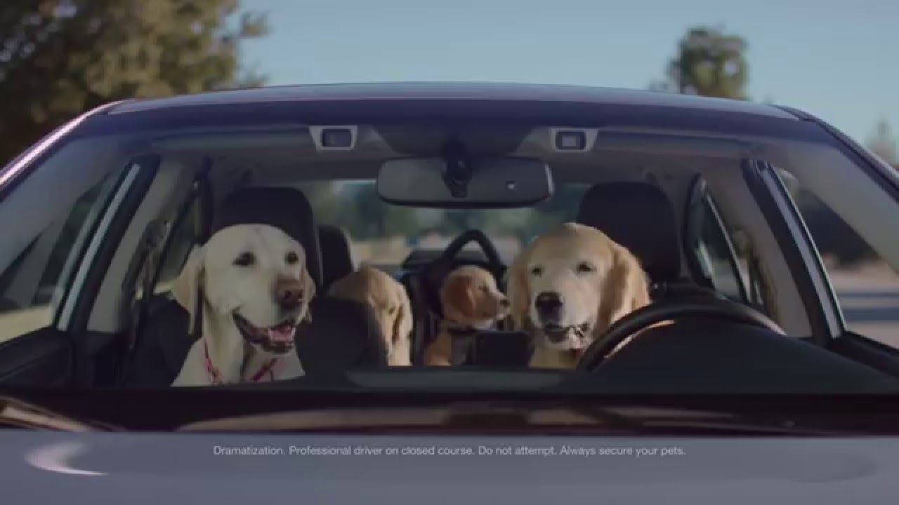Subaru Dog Park Commercial