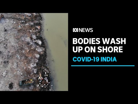 Indian COVID-19 strain of global concern, WHO warns, as bodies wash up on banks of Ganges | ABC News