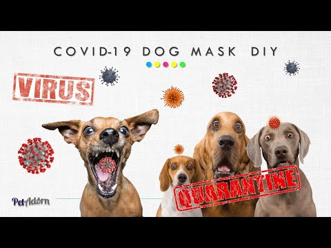 CovID-19 Coronavirus: How to make N95 medical dog face mask. Easy, NO sew, 2 DIY #withme projects. from YouTube · Duration:  15 minutes 34 seconds