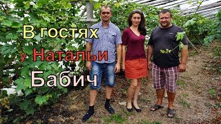 Виноградники Беларуси . г. Пинск . Виноградарь Наталья Бабич.