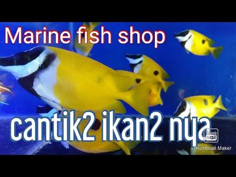 Marine fish shop in Brunei