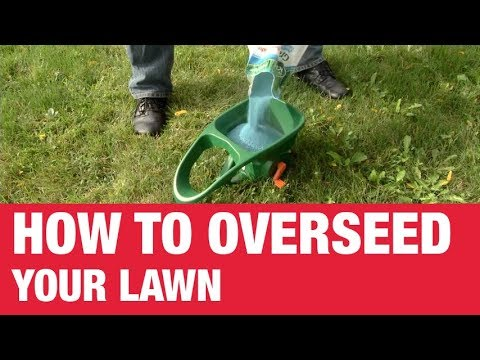 how to overseed your lawn  ace hardware, Natural flower