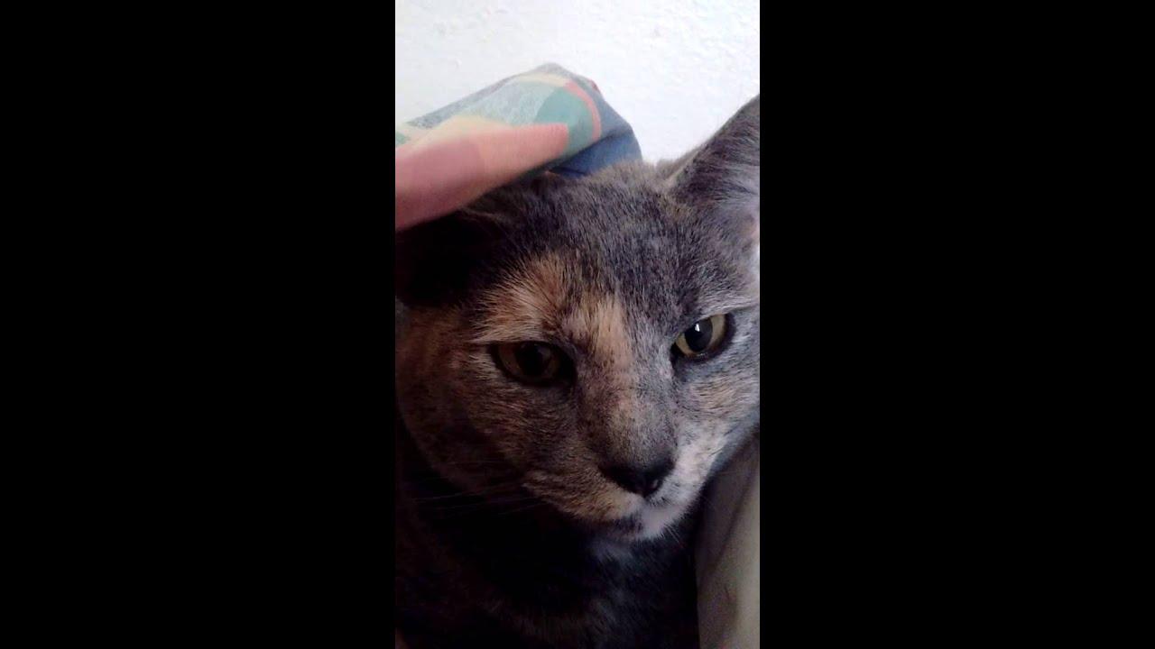 Youtube Cat Eye Tutorial: Crabby Cat.