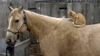 Honey and her kitten