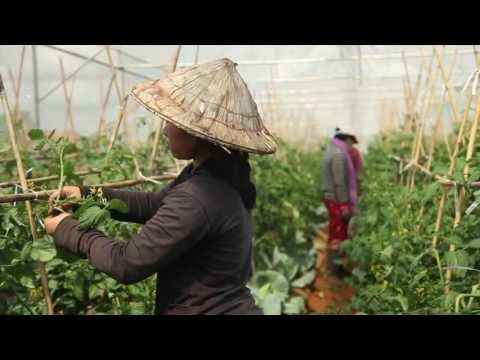 Quality investments from Lao PDR: organic contract farming i