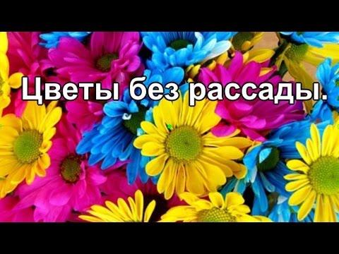Цветы без рассады.Многолетние цветы.  Однолетники.