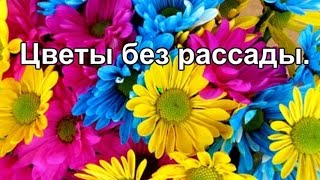 видео Однолетние цветы для дачи на все лето: какие выбрать