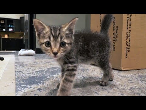 BABY KITTENS! - Super Cooper Sunday #116