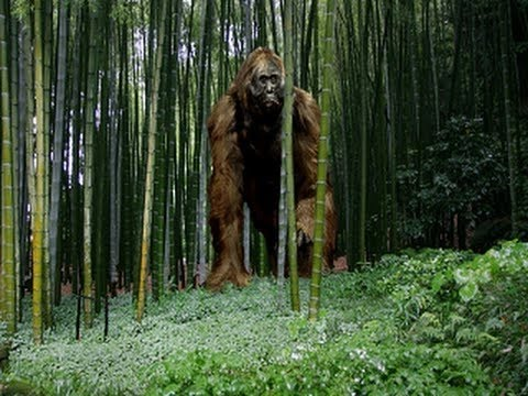 The Largest Ape that Ever Lived Documentary