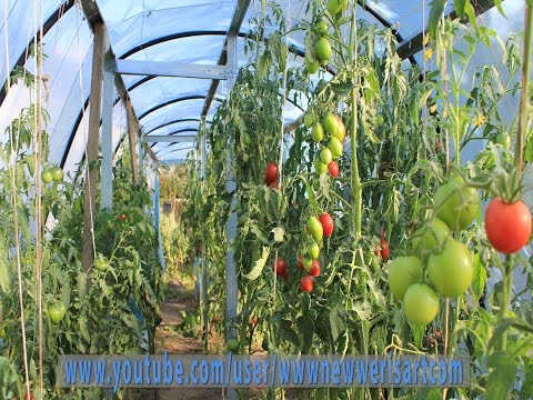 How to Build Large Greenhouses less $125 (DIY Project) FULL VIDEO!