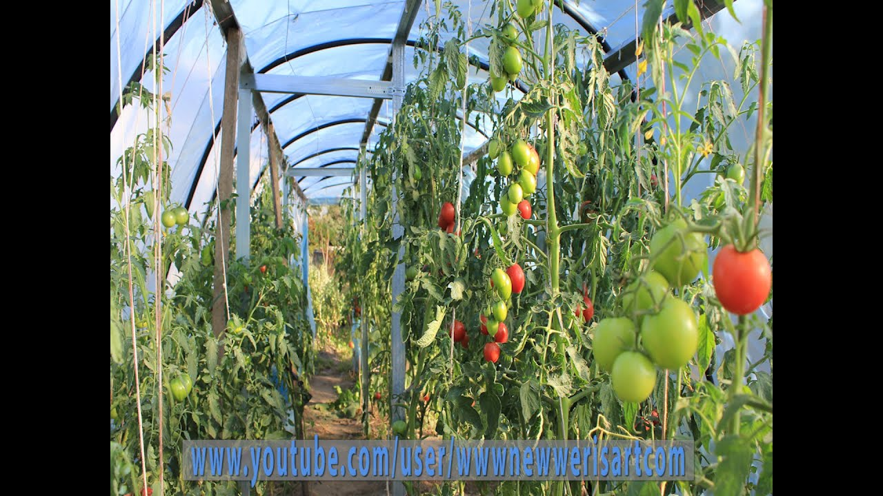 How to build large greenhouses less 125 diy project full video how to build large greenhouses less 125 diy project full video youtube solutioingenieria Gallery