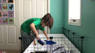 Cleaning The Guinea Pig Cage