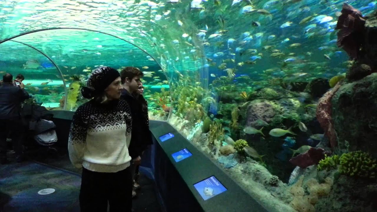 Fish aquarium in downtown toronto - Toronto Ripley S Aquarium Of Canada And Cn Tower January 2014 Youtube
