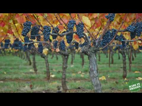 Willamette Valley Vineyards at Made In Oregon