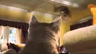Кошки против собак / Cats & Dogs / 2001