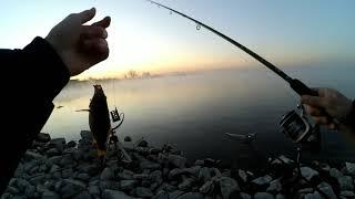 ШОК!!! Сколько видов рыб? Рыбалка на фидер в марте 2020!