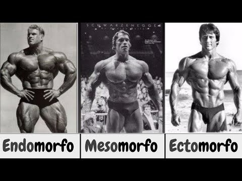 Scopri se sei Ectomorfo-Mesomorfo-Endomorfo (non puoi NON saperlo)
