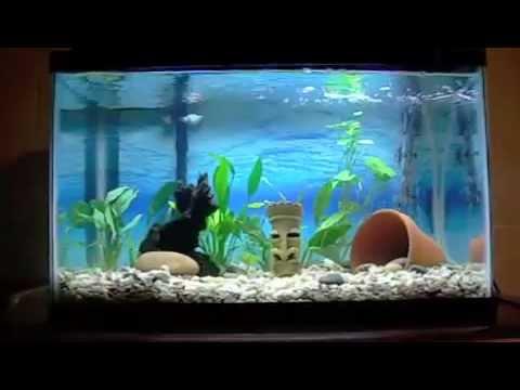 10 gallon fish tank youtube 10 gallon fish tank to for 10 gallon fish tank for sale