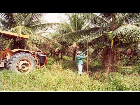 Curso Irrigação do Coqueiro Anão - Principais Componentes