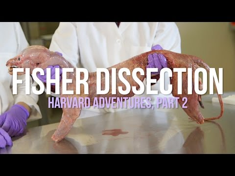 Fisher Dissection: Harvard Adventures, Part 2