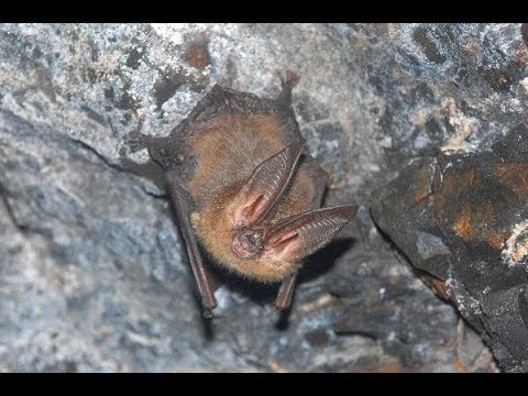 MILLIONS OF BATS LEAVE REMOTE CAVE, PHILIPPINES. TRAVEL. CULTURE.