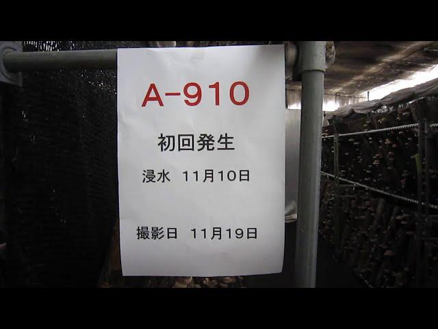 A910 初回発生2020
