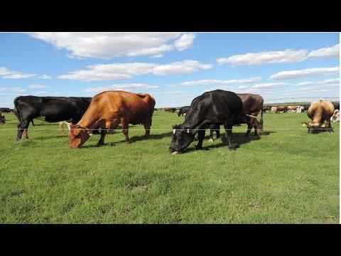Curso Conforto Animal para Maior Produção de Leite - Efeitos do Estresse Calórico