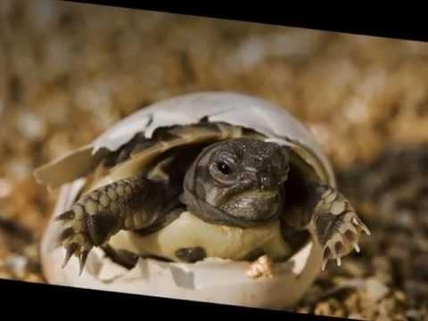 Save Tortoises & Freshwater Turtles in Jordan