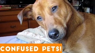 Download Funniest Confused Pets Compilation 2018 | Funny Pet Videos Mp3 and Videos