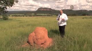 Fazenda à venda em Rio Verde MS com 1.050 hectares DESTAQUE