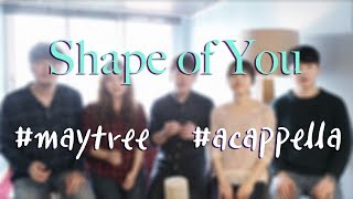 Shape of you acappella (Ed Sheeran cover) by Maytree 쉐입오브유 아카펠라 메이트리 커버