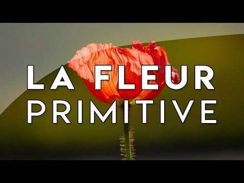La Toutoute Première Fleur