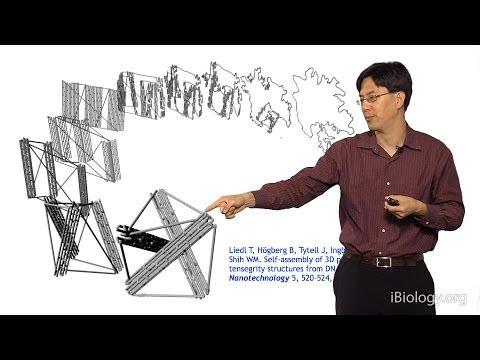 William Shih (Harvard) Part 1: Nanofabrication via DNA Origami
