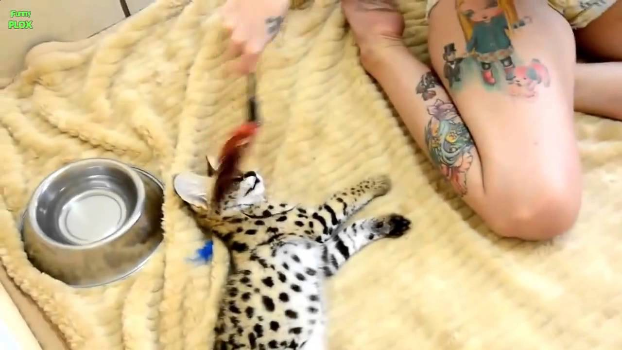 Cute Exotic Animal Baby Compilation - YouTube