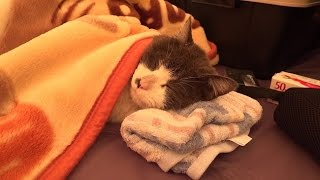 居候と過ごす冬キャンプ Camping to spend with a cat