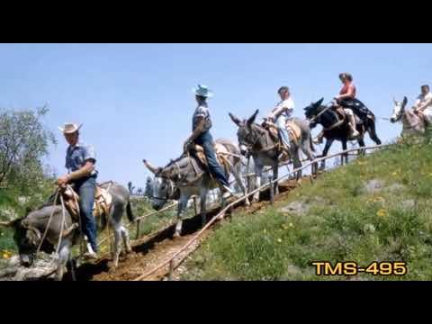 Youtube Mule Pack