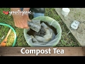 How to Make and Use Compost Tea in Your Organic Garden