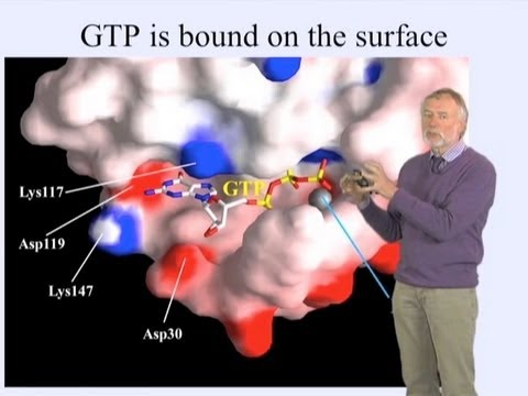 Alfred Wittinghofer (MPI) Part 2: GTPase Reactions and Diseases