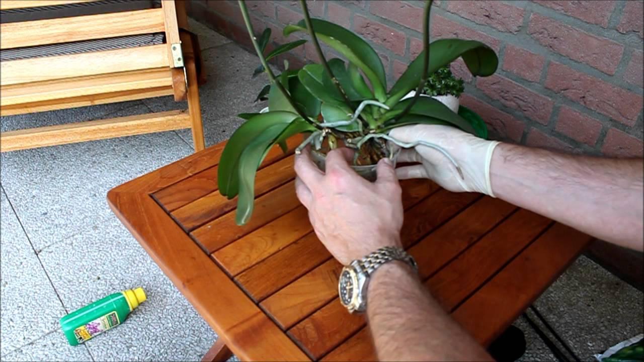 orchideen umtopfen und pflegen phalaenopsis newwonder555 youtube. Black Bedroom Furniture Sets. Home Design Ideas