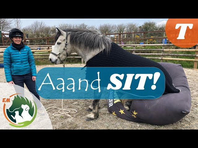 How to teach your HORSE to SIT ¦ Training VIDEO ¦ Emma Massingale
