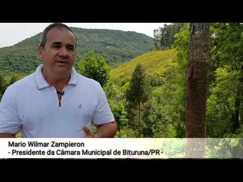 Araucária de pinhão precoce - entrevista Mario Wilmar Zampieron - Bituruna/PR
