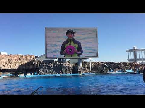 Port Of Nagoya Public Aquarium - Dolphin Performance Pt1 - 21/11/17