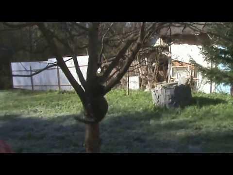 Funny Animals - Cats and Dogs, videos#2 История кошки Рябы.